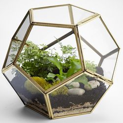 Polygon Glass Terrarium