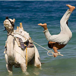 "Camel Diving 8"" x 10"" Photo"