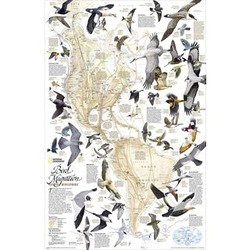 Bird Migration in the Americas Thematic Map