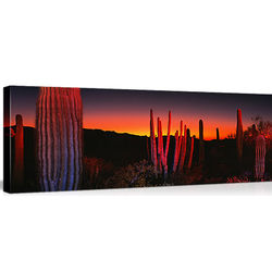 Organ Pipe National Park, Arizona Canvas
