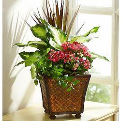 Springtime Plant Dishgarden