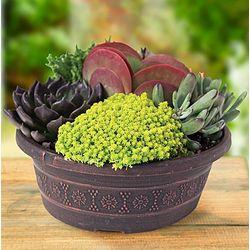 Proven Winners Savvy Succulents Dish Garden