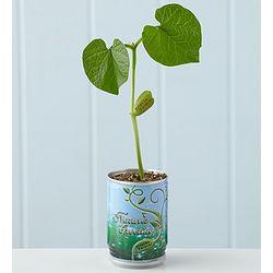 Nature's Greeting Magic Bean Plant