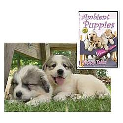 Ambient Puppies: Puppy Tales DVD