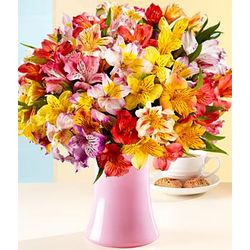 100 Blooms of Peruvian Lilies with Pink Vase