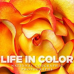 Life in Color Mini Book