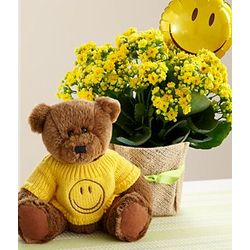 Smiley Face Bear and Kalanchoe Plant