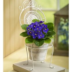 Lovely Chair of Violet Blooms
