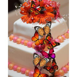 15 Edible Orange Monarch Butterfly Cake Decorations