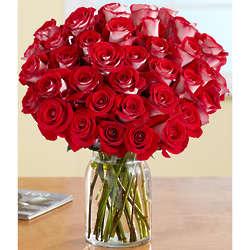 Three Dozen Red Velvet Roses