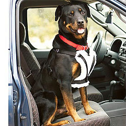 Comfort Ride Travelin' Dog Car Harness