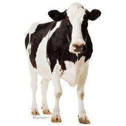 Cow Cutout
