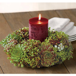 Succulent Plants Holiday Centerpiece