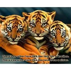 """8"""" x 10"""" Premium Luster Print Tiger Trio"""