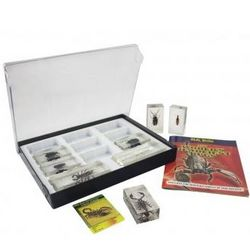 Real Bugs Collector Kit