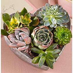 Heart of the Garden in Terra Cotta Pot