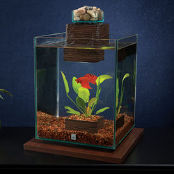 Chi Aquarium Kit