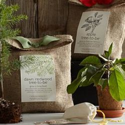Mini Tree Growing Kit