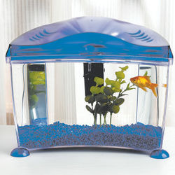 Goldfish Desktop Aquarium Kit