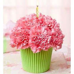 Cupcake in Bloom with Pink Carnations