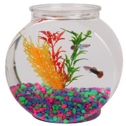 Plastic Fish Bowl