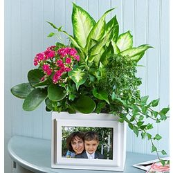 Blooming Garden Picture Frame Planter