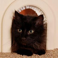 Cat Hole Cat Door with Brush