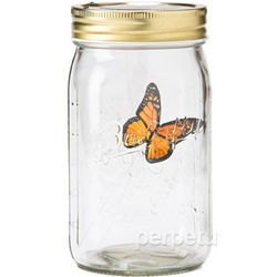 Monarch Butterfly in a Jar