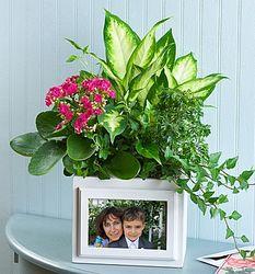 Tropical Garden Picture Frame Planter