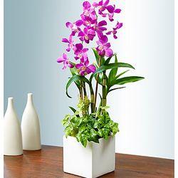 Classic Memories Orchid Garden