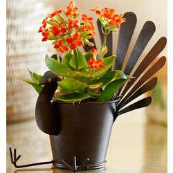 Kalanchoe Plant in Metal Turkey Pot