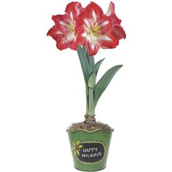 Amaryllis Garden Planter with Chalkboard Panel