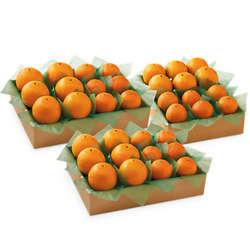 Tangerine and Navel Orange Combo Family Size Gift Box