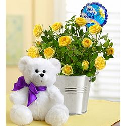 Get Well Flowers and Teddy Bear Set