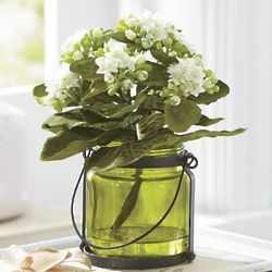 White Blooms Kalanchoe in Vase