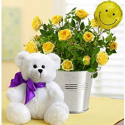 Sending You Sweet Smiles Rose Bush and Teddy Bear