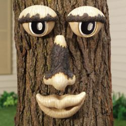 Tree Trunk Face