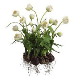 "17"" Cream & Green Artificial Tulip Arrangement with Flower Bulbs"