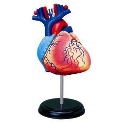 3 Inch Human Heart Anatomy Model