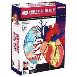 Lifesize Human Heart Anatomy Model