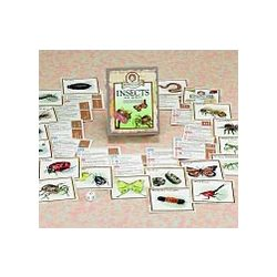 Professor Noggin's Insects and Spiders Card Game