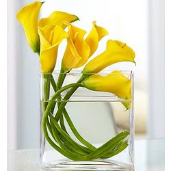 Mini Calla Lilies in Rectangular Glass Vase
