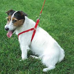 Red Comfort Wrap Nylon Adjustable Pet Harness
