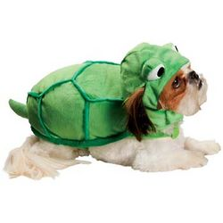 Halloween Turtle Dog Costume