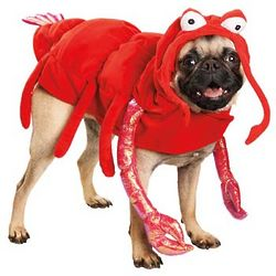 Halloween Lobster Dog Costume