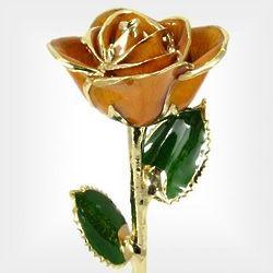 Gold Trimmed Peach Rose