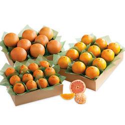 Triple Decker of Florida's Best Citrus Fruit Gift Box