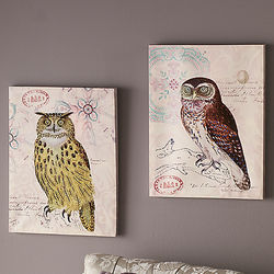 Haverford Owl Canvas Prints