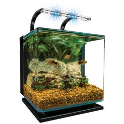 Contour Glass 5 Gallon LED Aquarium Kit