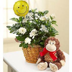 Get Well Gardenia Plant with Plush Monkey